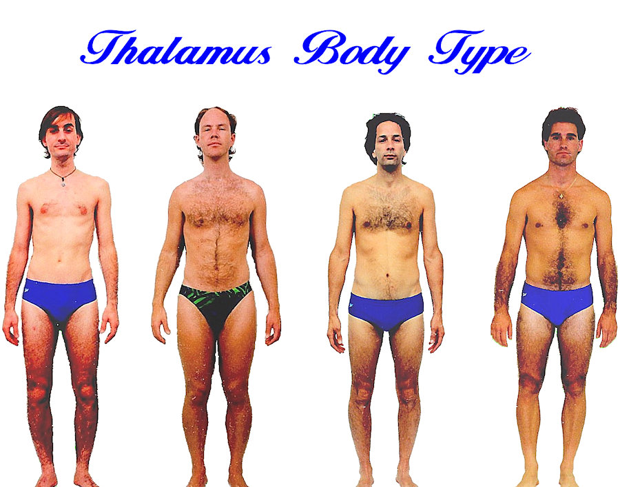 Mens Thalamus body shape